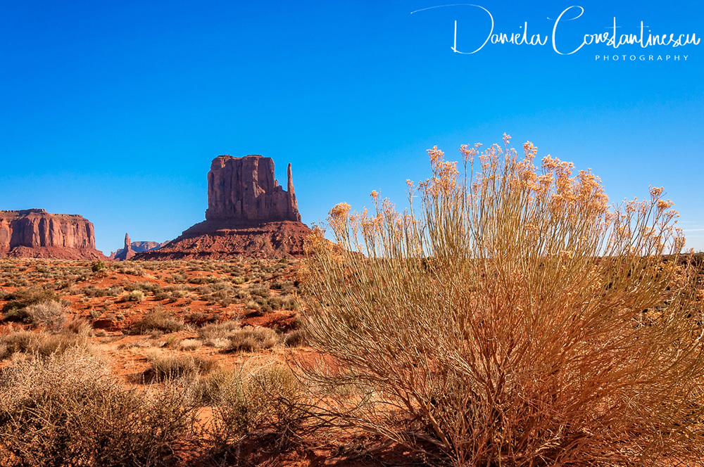 Monument Valley   East Mitten Butte and Desert Flowers