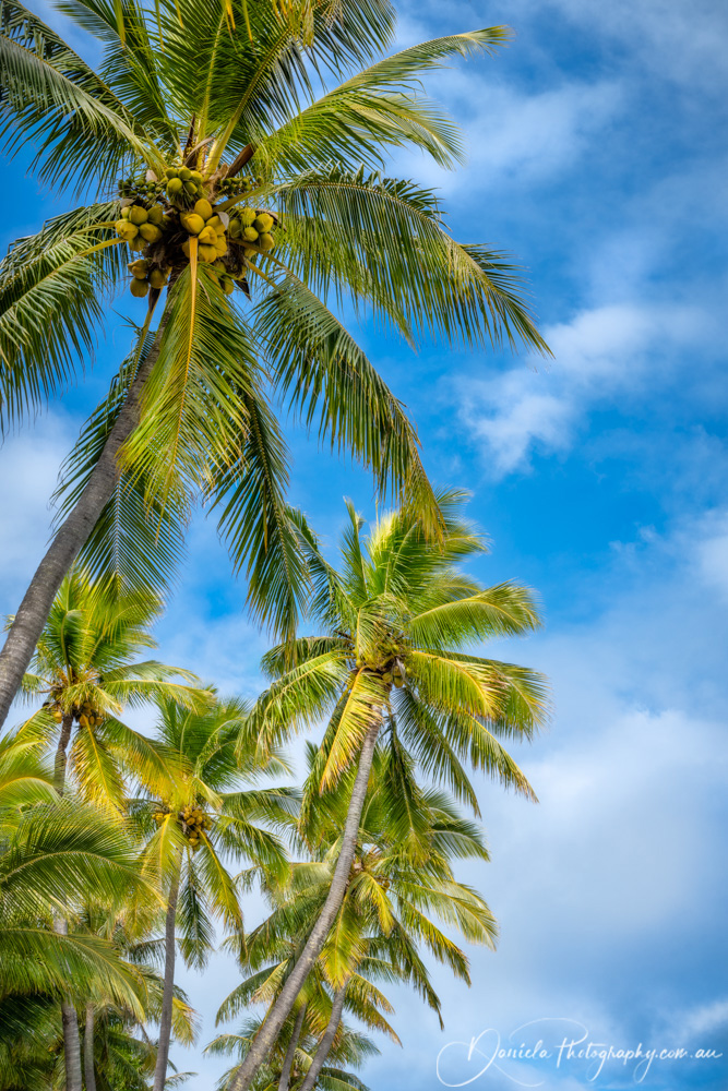 Coconut Palm Trees against the blue sky at Kuto Bay Beach