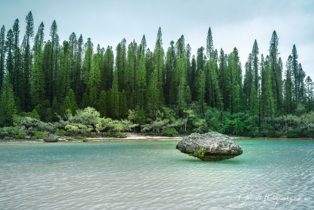 Nature corner at the secluded Natural Pool on Isle of Pines in New Caledonia