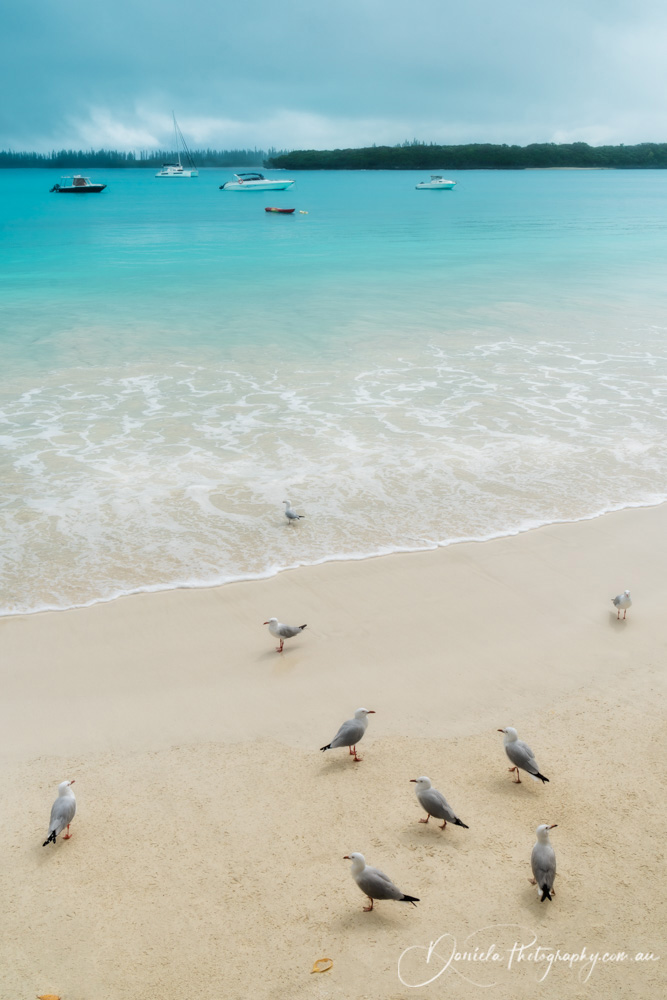 Seagulls on the beach at Isle of Pines, New Caledonia