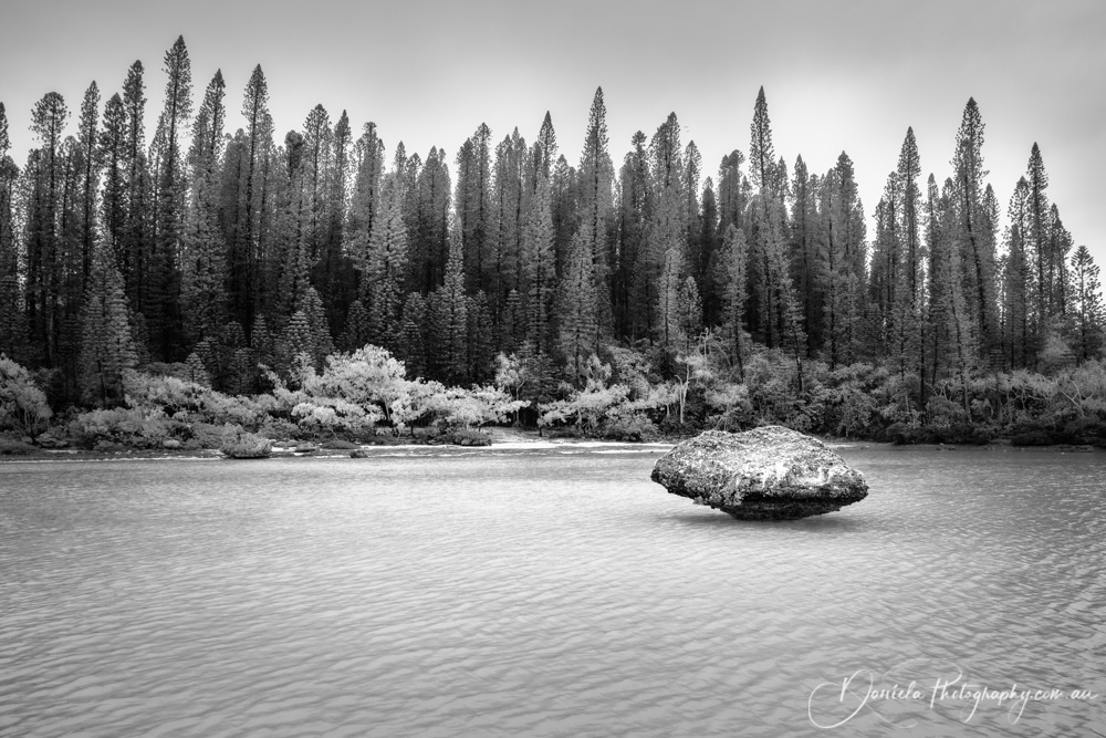 New Caledonia -Beautiful pine forest view at Natural Pool in BW